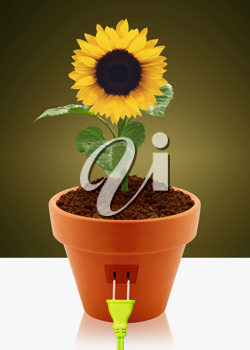 Royalty Free Photo of a Sunflower in a Flower Pot Sitting on a Table With an Electrical Plug in on the Side of the Planter