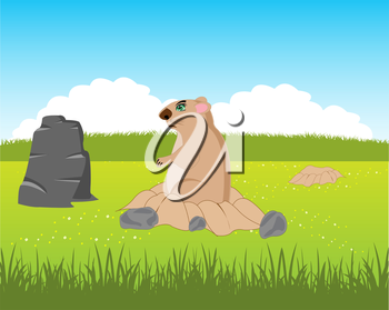 The Animal rodent woodchuck peers out burrow.Vector illustration