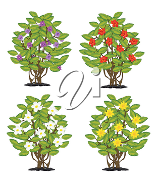 Sample of the flowering shrubbery on white background is insulated