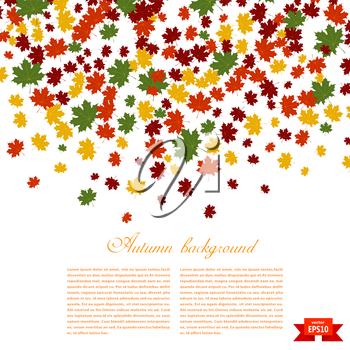 Autumn background. Illustration of falling red, yellow and green maple leaves. Image season. 