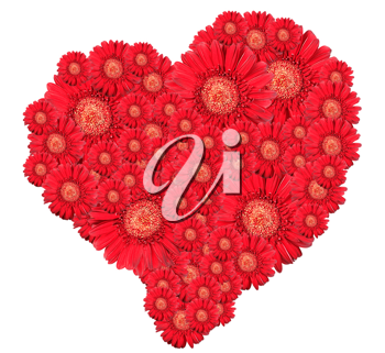 Bouquet of red flowers as heart-form. Isolated on white background. Close-up. Studio photography.