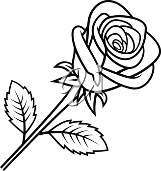 Sketch of Rose isolated on white background. Use for fabric design, tattoo, pattern and decorating greeting cards, invitations