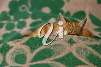 Red-haired cat lies on a plaid and spies