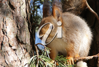 Royalty Free Photo of a Squirrel