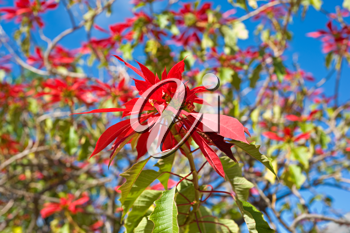 red flowers and blue sky as background