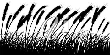 Wheat and gras background. All objects are separated.