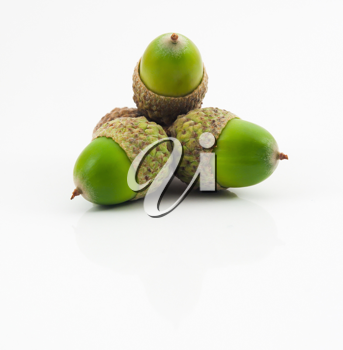 Royalty Free Photo of Three Green Acorns