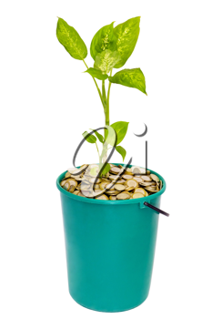 Royalty Free Photo of a Plant in a Bucket of Coins