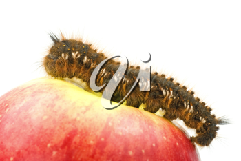 Royalty Free Photo of a Caterpillar on an Apple