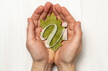 Hands with dry leaf. Concept for life balance , wellness, mediatation.
