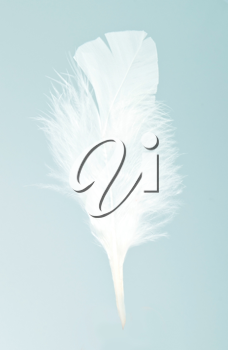 White feather on the blue bakground