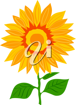 Royalty Free Photo of a Sunflower