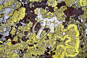 Texture of yellow and brown mold on stone