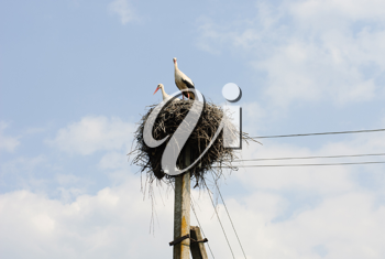 Royalty Free Photo of a Stork's Nest