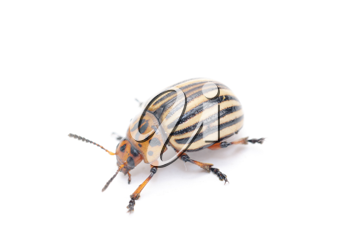 Royalty Free Photo of a Bug