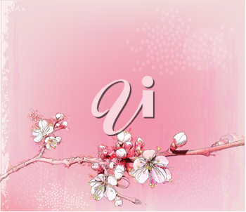 Royalty Free Clipart Image of a Cherry Blossom Branch