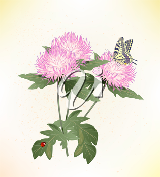 Royalty Free Clipart Image of Pink Asters
