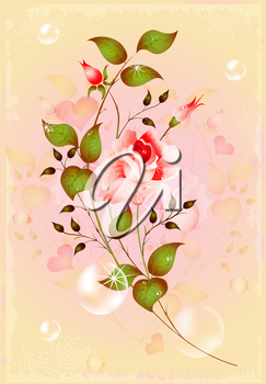 sparkling rose for greeting card