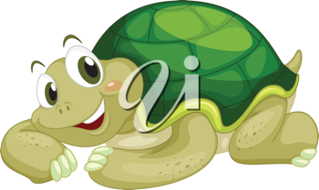 Animated turtle on a white background