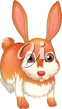 Illustration of a rabbit on a white background
