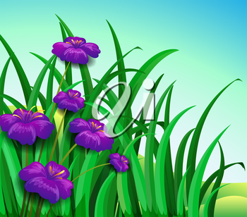Illustration of a violet flowers in the garden