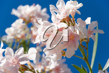 Royalty Free Photo of Flowers