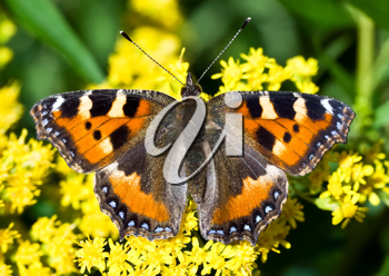 Royalty Free Photo of a Monarch Butterfly