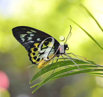 Tropical Butterfly, Close Up Shot