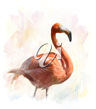 Watercolor Digital Painting Of Flamingo