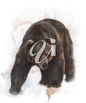 Watercolor Digital Painting Of  Grizzly Bear