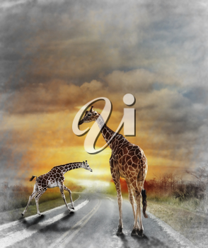 Digital Painting Of Two Giraffes Walking On The Road