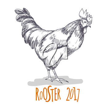 Rooster. Cock Illustration in Vintage hand drawn style. Grunge label, sticker for the farms and manufacturing depicting roster. Grunge label for the chicken product. Symbol of 2017 New Year. Vector il