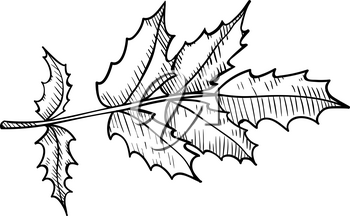 Leaves, twigs - design element in pencil drawing outline style