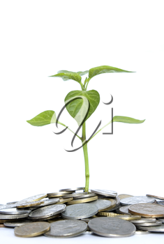 plant in coins  isolated on white background