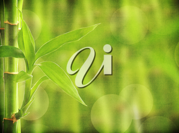 Royalty Free Photo of a Bamboo Background