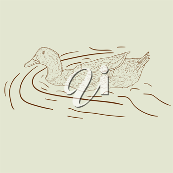 Royalty Free Clipart Image of a Duck