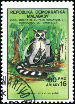 REPULLICA MALAGASY - CIRCA 1988: A stamp printed in Malagasy (Madagascar) shows Ring-tailed lemur with calves - Lemur Catta, circa 1988