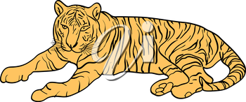 Sketch beautiful tiger on a white background. Vector illustration.