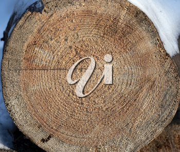 Wooden circle with a split cut of the log.