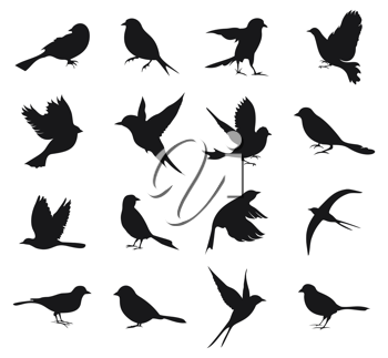 Set of silhouettes of birds. A vector illustration