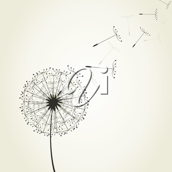 From a dandelion seeds fly. A vector illustration