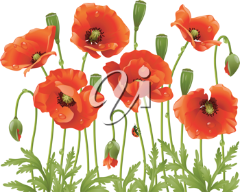 Royalty Free Clipart Image of Poppies