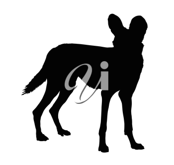 Detailed Silhouette of Alert Wild Dog