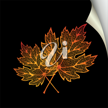 Royalty Free Clipart Image of Autumn Leaves on Black