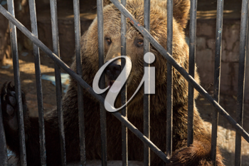 Bear behind bars in a zoo