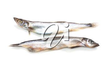 two of capelin on a white background