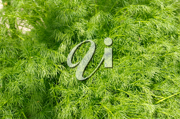 background of fennel plants