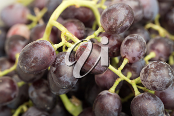 Red grape with water drops, closeup background