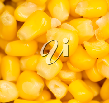 Raw canned corn texture wallpaper
