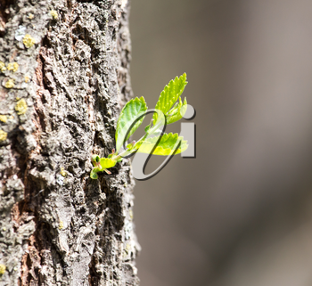 sprout on tree bark